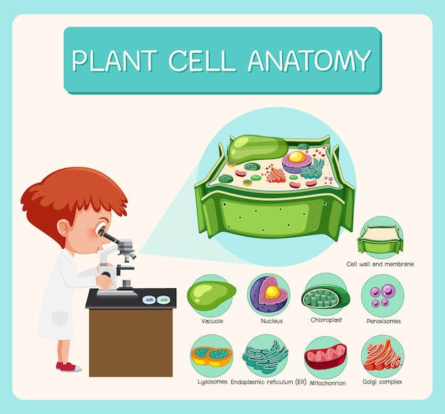 Anatomy of plant cell biology diagram
