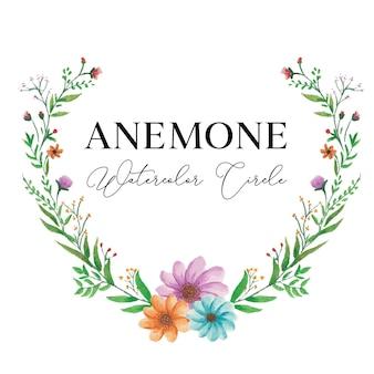 Anemone floral watercolor  illustartion