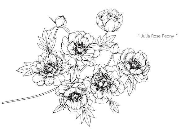 Anemone leaf and flower drawings. vintage hand drawn botanical illustrations.