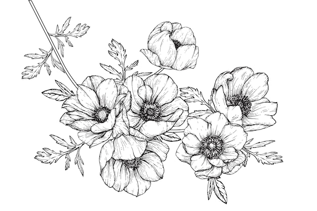 Anemone leaf and flower drawings
