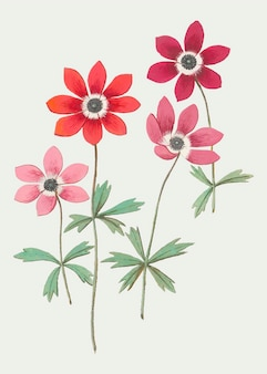 Anemone in vintage style