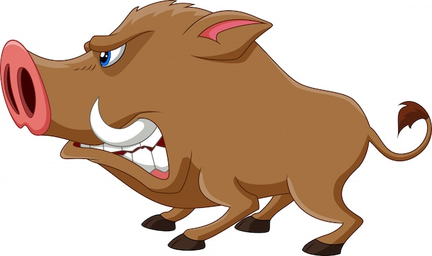 Angry wild boar cartoon