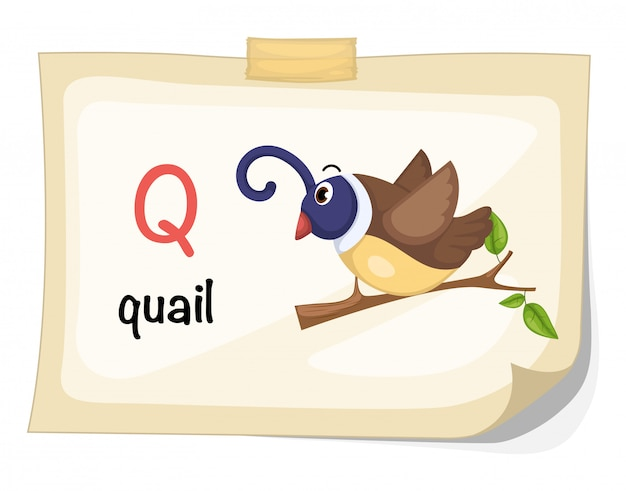 Animal alphabet letter q for quail illustration vector