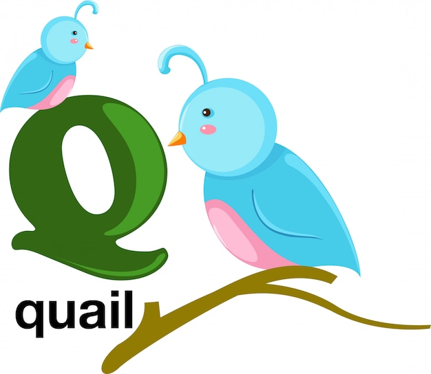 Буква алфавита животных - q