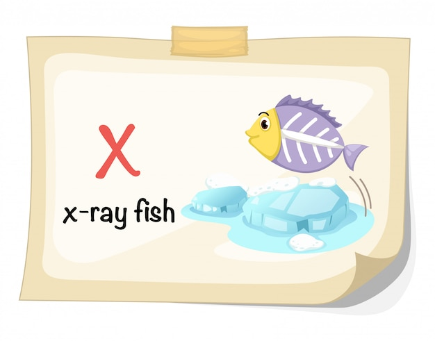 Animal alphabet letter x for x-ray fish illustration vector