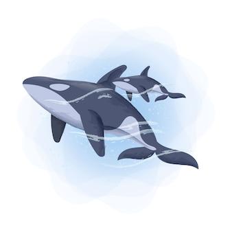 動物の赤ちゃんシャチのクジラと母の水彩イラスト
