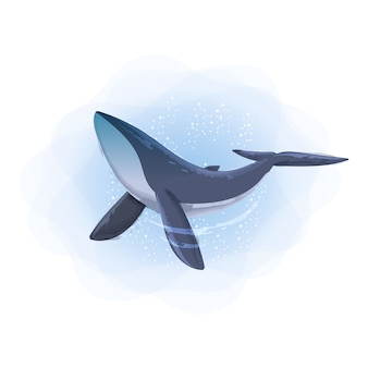 動物のシロナガスクジラの水彩イラスト