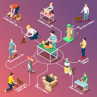Animal care volunteers isometric flowchart