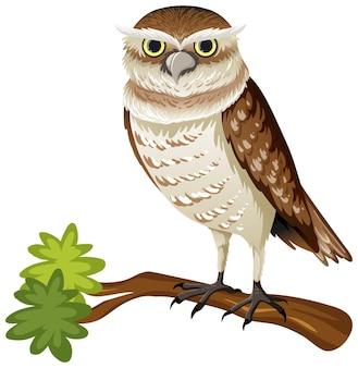 白い背景の上のフクロウの動物の漫画のキャラクター