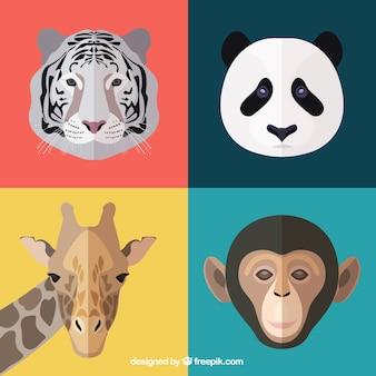 Facce di animali
