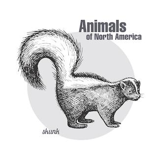Animal of north america skunk.