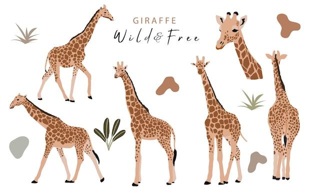 Коллекция объектов животных с жирафом, джунглями. иллюстрация для значка, наклейки, для печати