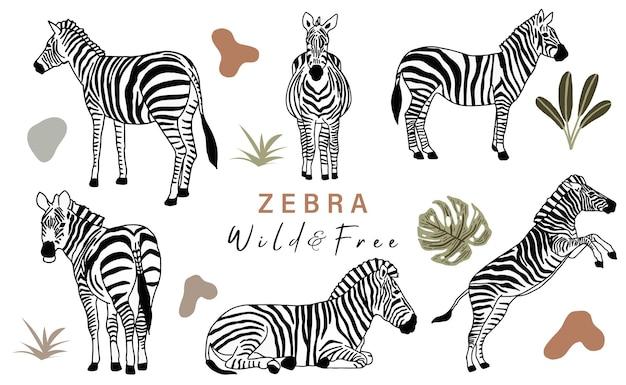 Коллекция животных объектов с зеброй. векторная иллюстрация для значка, наклейки, для печати