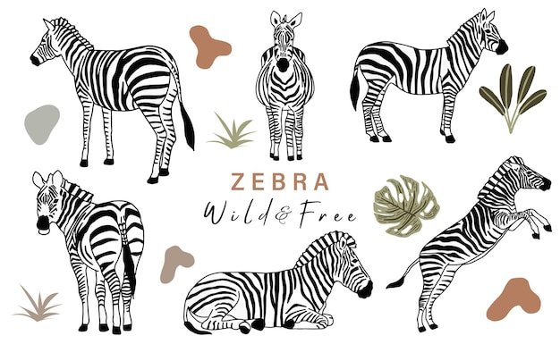 Animal object collection with zebra.vector illustration for icon,sticker,printable