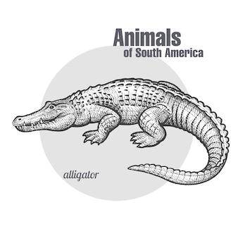 남미 케이먼의 동물. 프리미엄 벡터