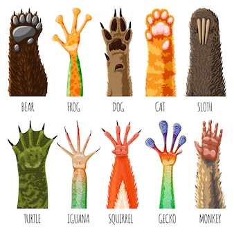Animal paw  animalistic pets claw or hand of cat or dog and pawed bear or monkey foot illustration pawky mammals hello set isolated on white background