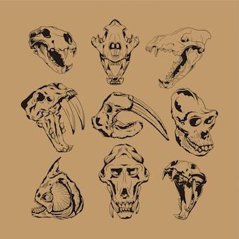 Коллекция скелетов животных