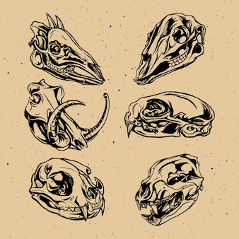 동물 두개골 벡터