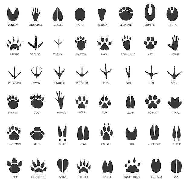 Animal tracks set