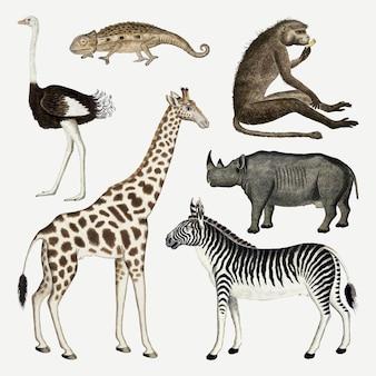 Collezione di disegni ad acquerello antichi vettoriali di animali, remixati dalle opere di robert jacob gordon