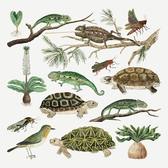 ロバートジェイコブゴードンのアートワークからリミックスされた動物ベクトルアンティーク水彩画コレクション