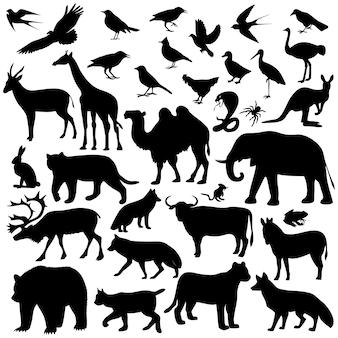 白で隔離される動物の世界のコレクション