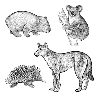 Animals of australia. koala bear, wombat, echidna, dingo dog.