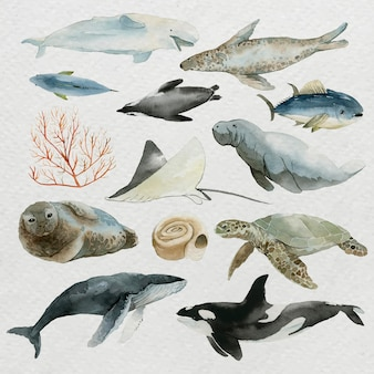 Animals from the sea in watercolor set vector