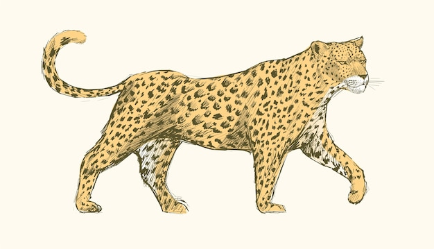 Animals illustration art set