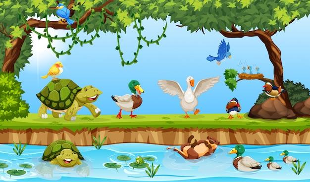 Животные в пруду
