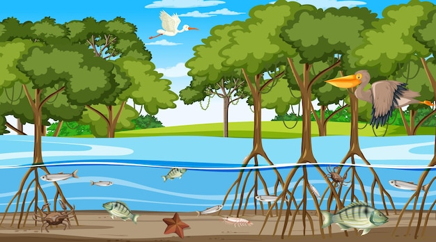 Animals live in mangrove forest at daytime scene