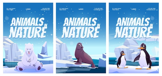Animals in nature posters with penguin polar bear and seal.