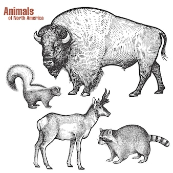 Animals of north america set.