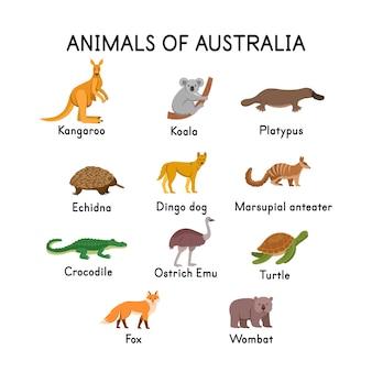 호주 캥거루 코알라 오리너구리 바늘 두더지 딩고 개 악어 거북이 여우 웜뱃 타조 에뮤의 동물 흰색 배경에 아이들을위한 평면 만화 일러스트 레이션