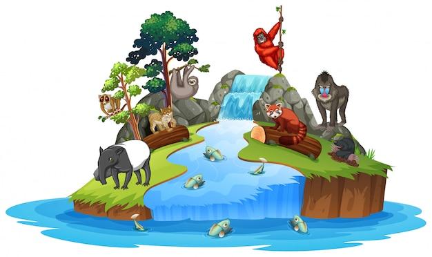 섬 장면에 동물