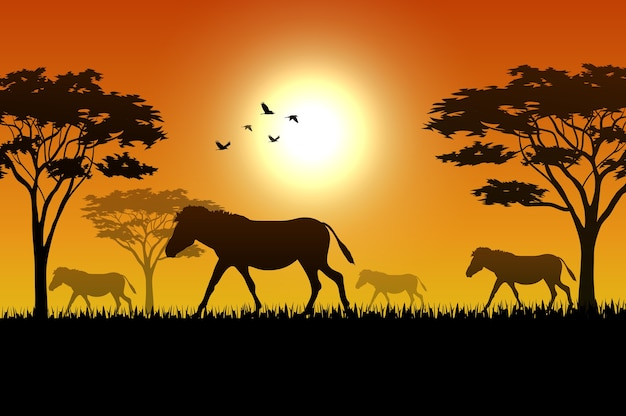 Силуэт животных на закате в саване