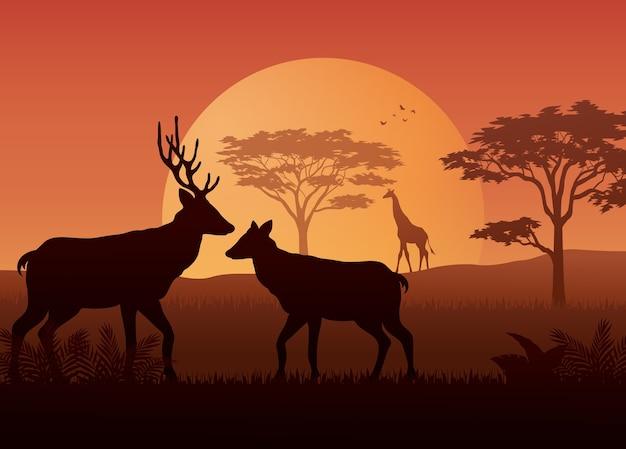 Animals silhouette in sunset at savanah