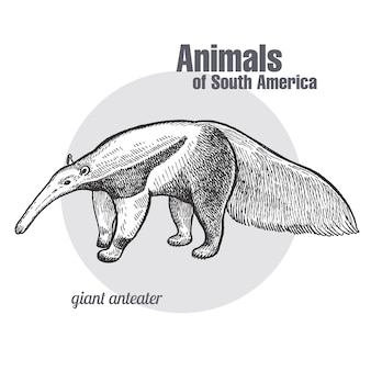 Animals of south america giant anteater.