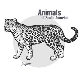 Animals of south america jaguar.