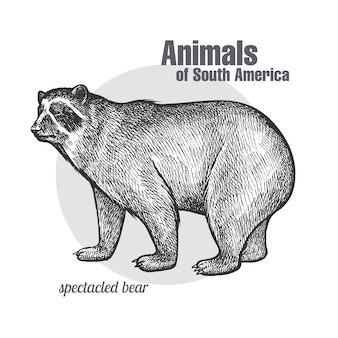 Animals of south america spectacled bear.
