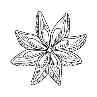 흰색 배경에 고립 된 새겨진 스타일의 아니스. 빈티지 스케치 개요 향신료를 닫습니다. 벡터 일러스트 레이 션 디자인입니다.