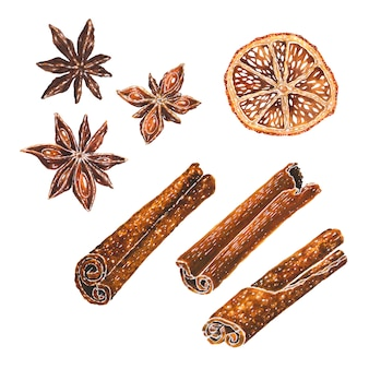 Anise stars, dried orange slice and cinnamon watercolor illustration