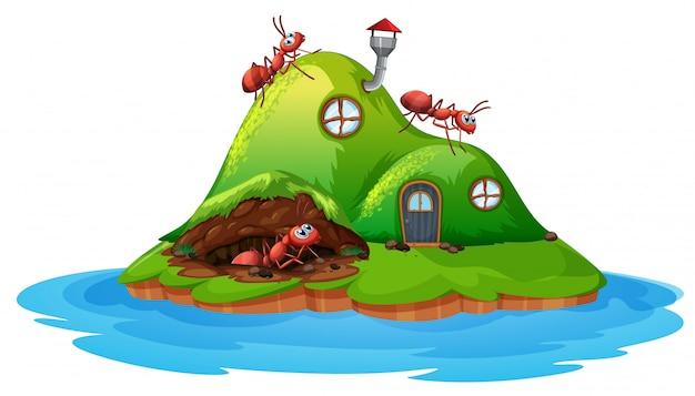 흰색 배경에 개미 언덕 집