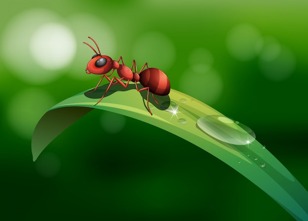 An ant above the leaf