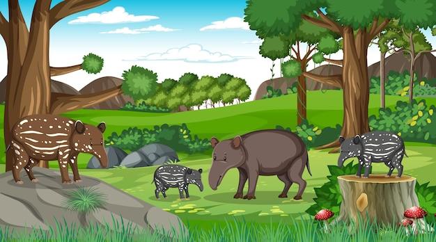 Famiglia di formichieri nella scena della foresta con molti alberi