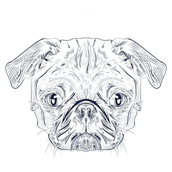 Antique engraving drawing  of pug dog head isolated