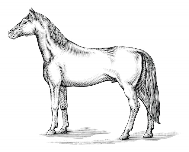 말 흑백 클립 아트 절연, 드로잉 말 빈티지 스타일의 골동품 조각 그림
