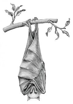 Антиквариат летучей мыши рисовать винтажный стиль гравировки на белом фоне