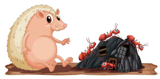 개미와 고슴도치