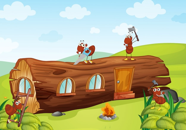 アリと木造住宅
